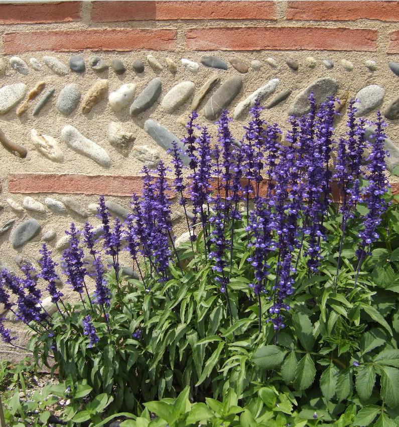 Bas de mur en briques et galets de Garonne en épis