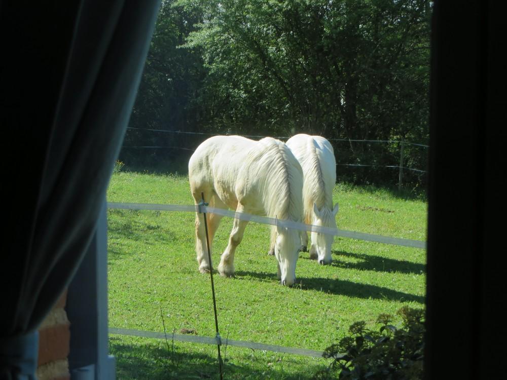 Les chevaux d'attelage