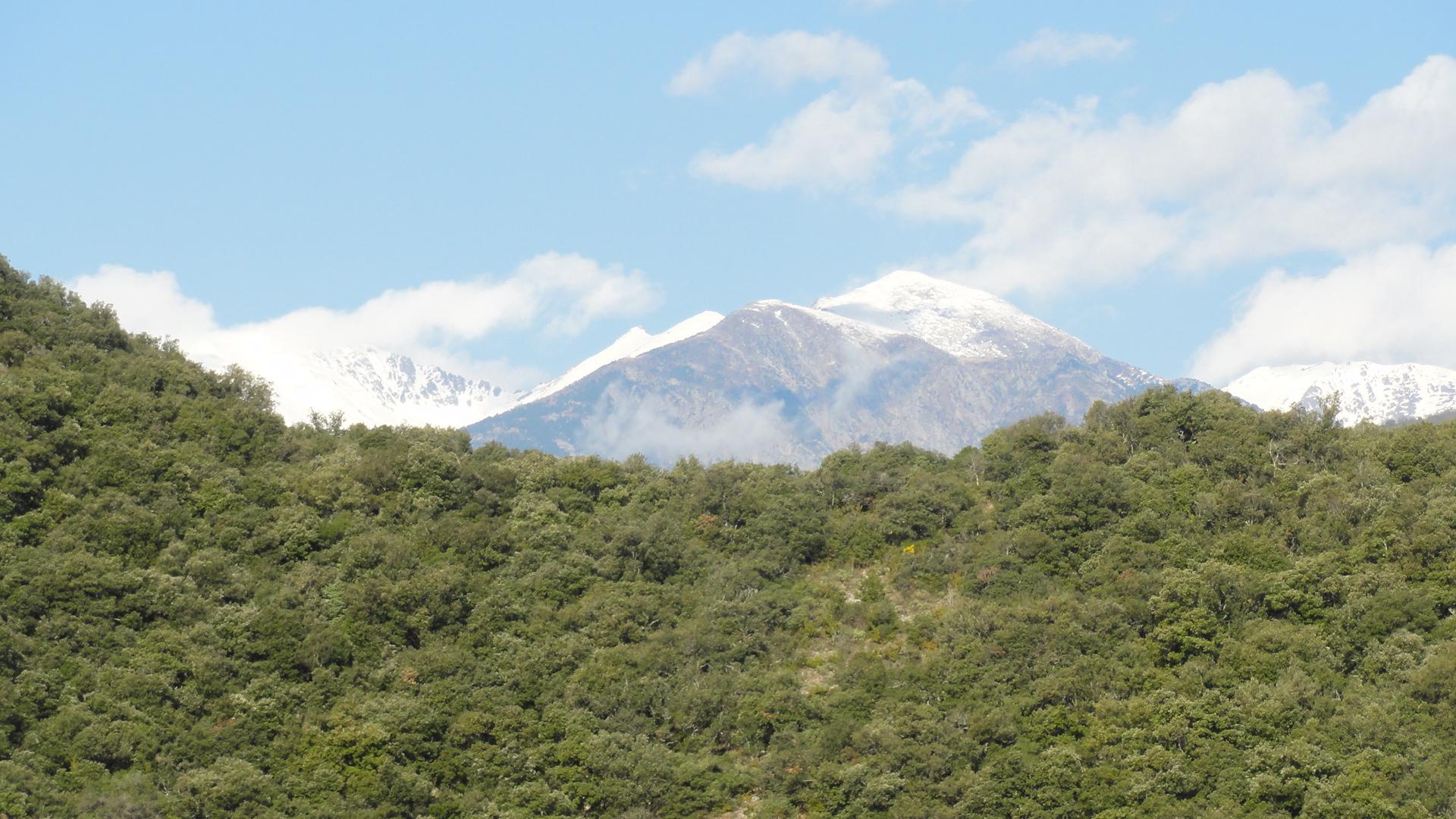 Le Canigou enneigé vu depuis les falaises